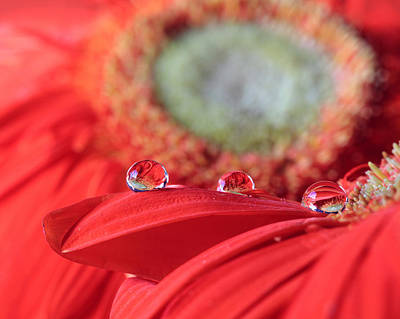 Photograph - Flower Reflections by Angela Murdock