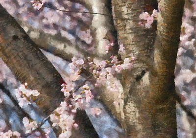 Mikesavad Photograph - Flower - Sakura - Spring Blossom by Mike Savad