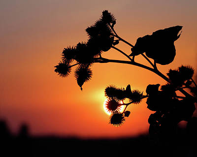 Photograph - Flower Silhouette by Teemu Tretjakov