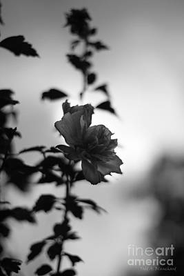 Photograph - Flower Silhouette by Todd Blanchard