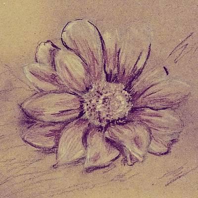 Drawing - Flower Sketch  by Kara Evelyn-McNeil