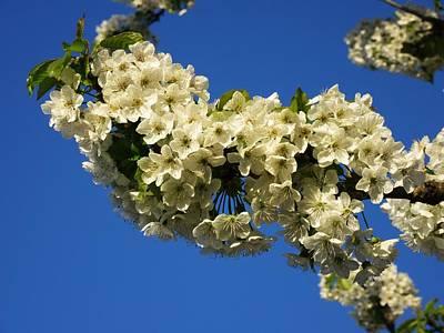Photograph - Flower Sky by Vesna Martinjak