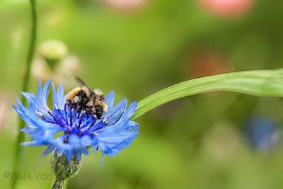 Photograph - Flower Spoon Bee Full..... by Paul Vitko