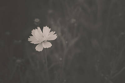 Photograph - Flower Standing Out In Black And White by Joni Eskridge