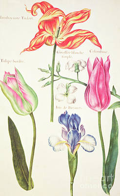 Irises Drawing - Flower Studies  Tulips And Blue Iris  by Nicolas Robert