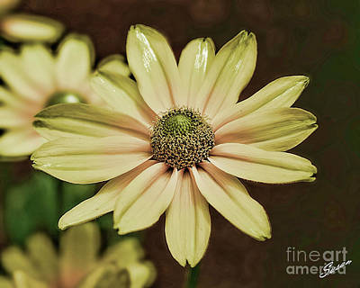 Photograph - Flower by Susan Cliett