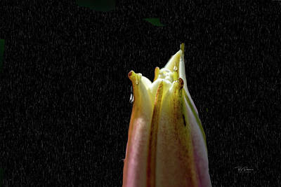 Photograph - Flower Tears by Bill Posner