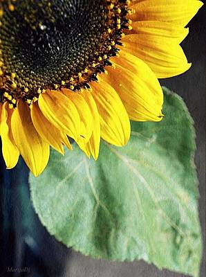 Photograph - Flower That Follows The Sun by Marija Djedovic