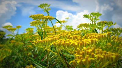 Photograph - Flower Tops by Mandy Shupp