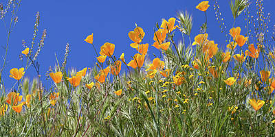 Photograph - Flower Trail Diamond Valley Lake by Cliff Wassmann