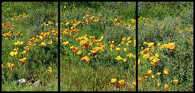 Photograph - Flower Triptych by Laurel Powell