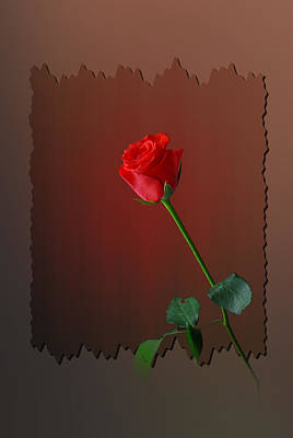 Flower Two Art Print by Deepak Pawar