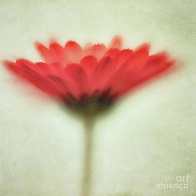 Flower Whispers Art Print by Priska Wettstein