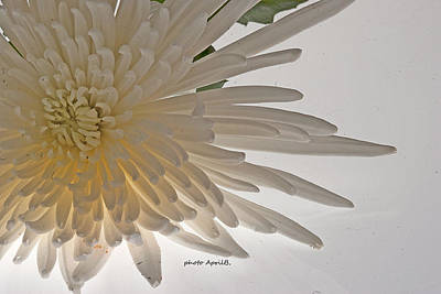 Spring Photograph - Flower-white by April Bielefeldt