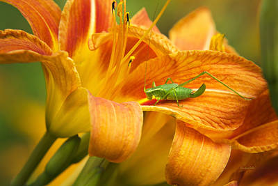 Grasshopper Photograph - Flower With Company by Christina Rollo