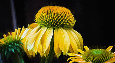 Echinacea Photograph - Flower - Yellow Coneflower - Natural Beauty - Macro by Black Brook Photography