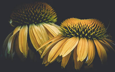 Coneflower Photograph - Flower - Yellow Coneflowers - Best Of Friends - Macro by Black Brook Photography