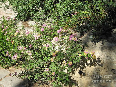 Photograph - Flowered Walk by Donna L Munro