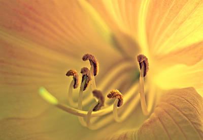 Photograph - Flowerheart by Alexander Kunz
