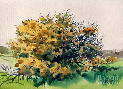 Painting - Flowering Acacia Tree by Donald Maier