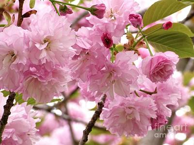 Photograph - Flowering Almond by Jean Wright