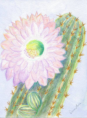 Flowering Cactus Art Print by Dawn Marie Black