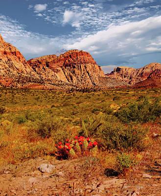 Photograph - Flowering Cactus In The Desert by Alan Socolik