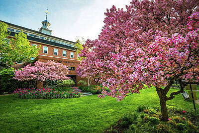 Photograph - Flowering Crabapples At The Belknap Mill by Robert Clifford