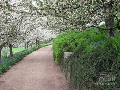 Photograph - Flowering Crabtrees by Kathie Chicoine