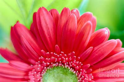 Photograph - Flowering Horizon by Graesen Arnoff