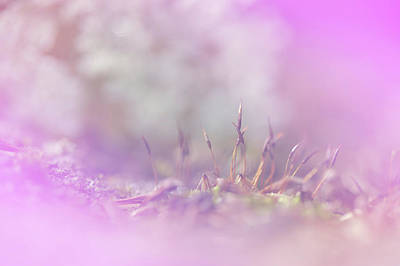 Photograph - Flowering Moss. Little Fairy Land. Pink by Jenny Rainbow