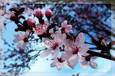 Flowering Of The Plum Tree 6 Art Print by Jean Bernard Roussilhe