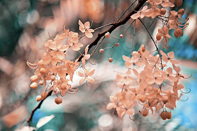 Photograph - Flowering Tree. Nature In Alien Skin by Jenny Rainbow