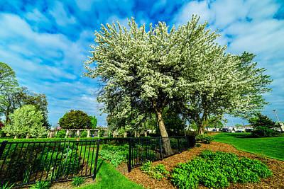 Photograph - Flowering Trees by Randy Scherkenbach