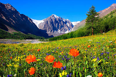 Flowering Valley. Mountain Karatash Art Print