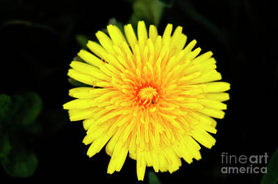 Colourfull Photograph - Flowering Weed by David  Hollingworth