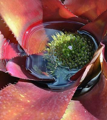 Photograph - Flowers 8 15 by John Hintz