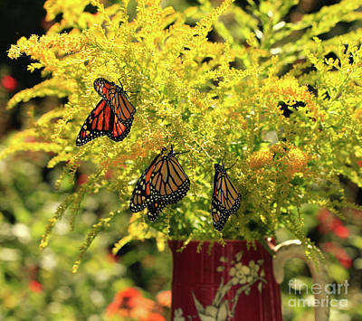 Photograph - Flowers And Butterfies In Red Vase Photo by Luana K Perez
