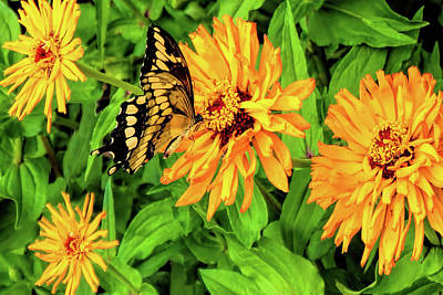 Photograph - Flowers And Butterflies by Pat Cook