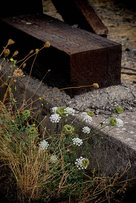 Landscapes Photograph - Flowers And Concrete by Kristen Beck