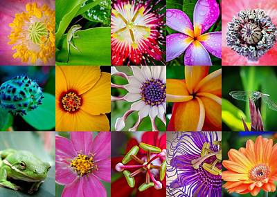 Photograph - Flowers And Creatures by TK Goforth