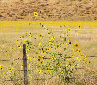 Photograph - Flowers And Fence by Dart and Suze Humeston