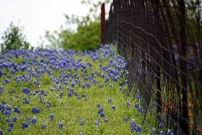 Photograph - Flowers And Fences by Debi Demetrion