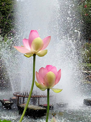 Photograph - Flowers And Fountains by Helen Haw