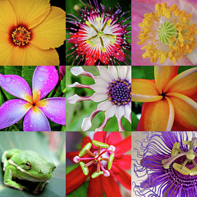 Photograph - Flowers And Froggy Squared by TK Goforth