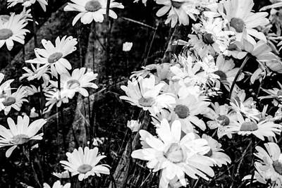 Flowers And Gardens  Art Print