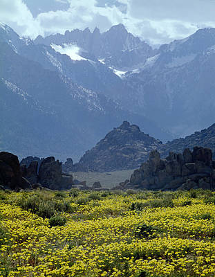 Photograph - 1m6438-flowers And Mt. Whitney  by Ed  Cooper Photography