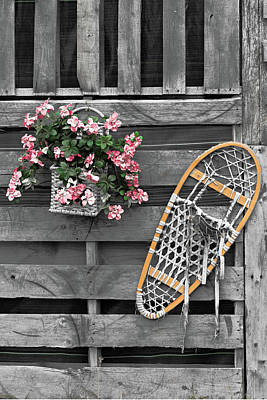 Photograph - Flowers And Snowshoe by Peter J Sucy