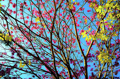 Art Print featuring the photograph Flowers And Trees by D Davila