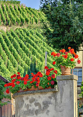 Photograph - Flowers And Vines by Alan Toepfer